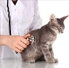 Ветеринарные клиники в Волоте
